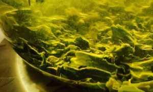Зеленый чай: калорийность
